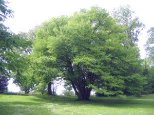 kfpark_kuchenbaum